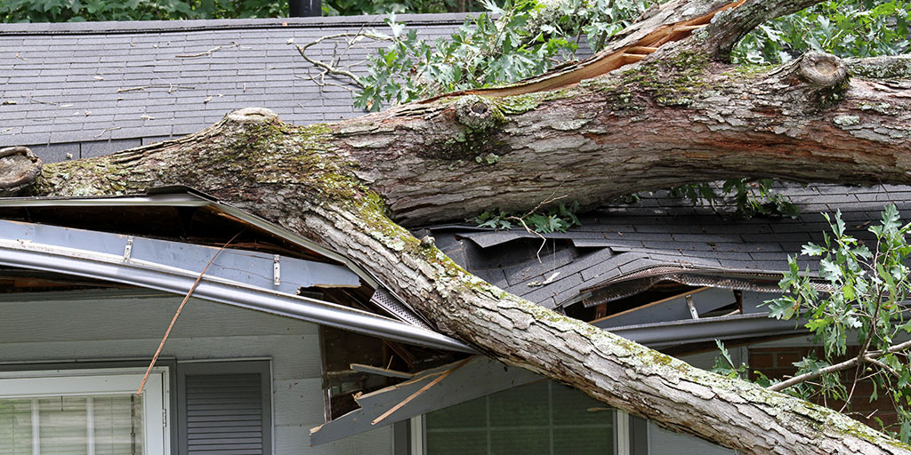 Roof damage from tree