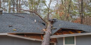 Tree damage to a roof